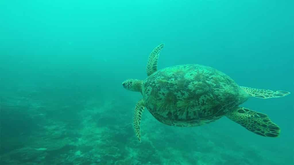 Simeuleu Surf Surf Trip Simelue, Sumatra, Indonésie - Turtle Surf Resort