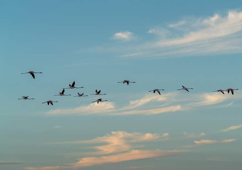 Kite camp Lagon de Dakhla : Le Confort