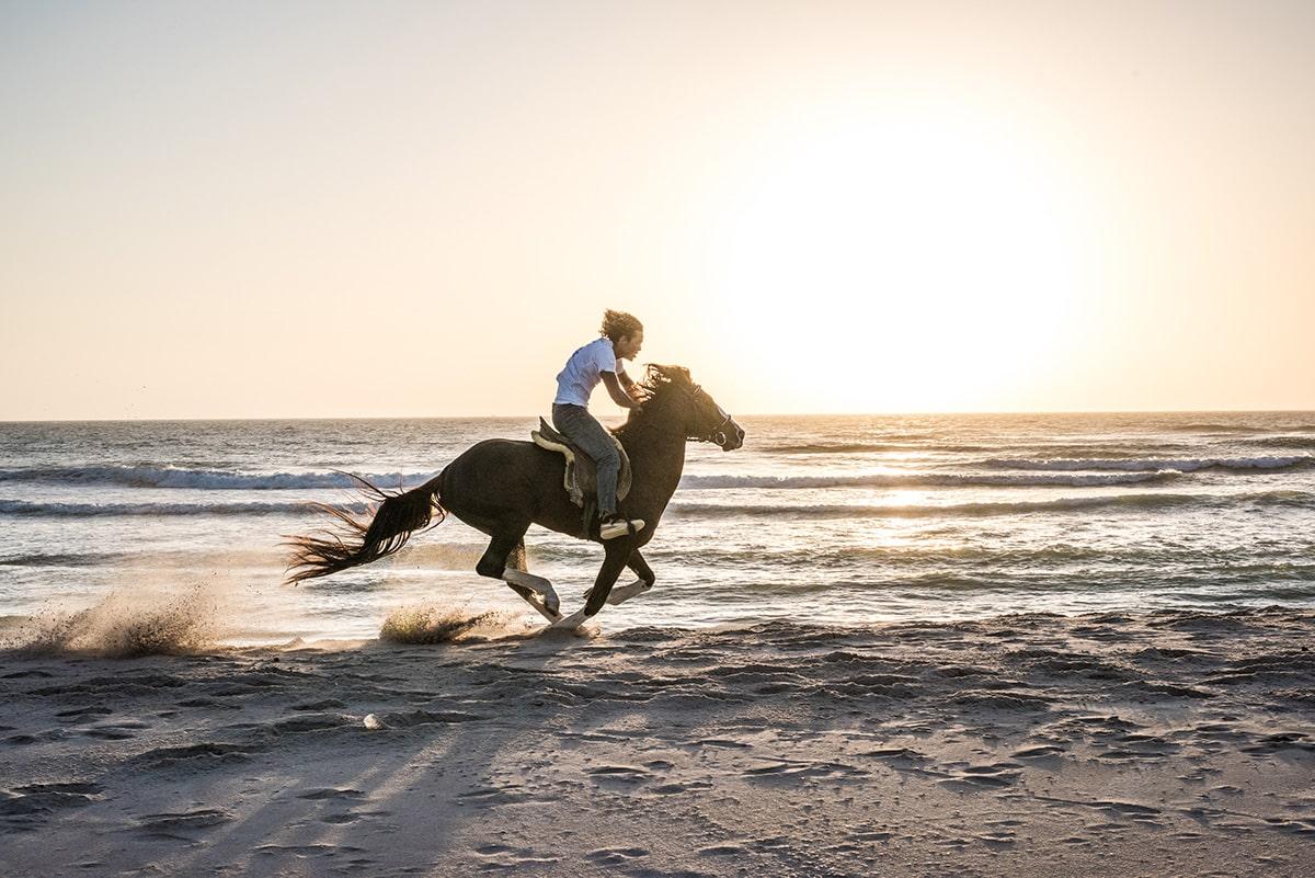 Equitation-11